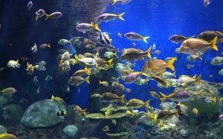 Рыба во сне для мужчины: видеть, к чему снится по соннику, подробное толкование