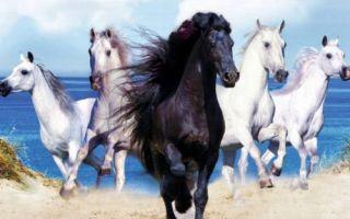 Лошадь и петух: совместимость в браке и любви по гороскопу