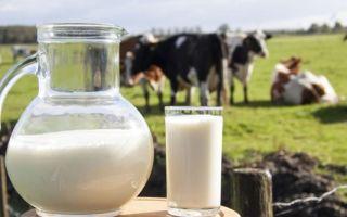 Заговор на молоко: как вылечить кота и сделать так, чтобы покупали козье, лилось рекой из груди