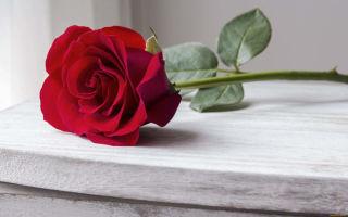 Приворот на мужа: как читать в домашних условиях и на расстоянии, возможные опасности