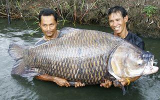 Видеть во сне большую рыбу (крупную, огромную): для женщины и мужчины, к чему снится в воде, в руках, с икрой, много