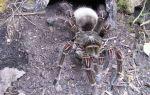 Порча ползун (паучья): что такое, как снять, определить