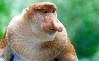 Гороскоп на 2020 год по году рождения для мужчины-обезьяны: что ждет в любви и отношениях, деньгах и карьере, прогноз от глоба и володиной