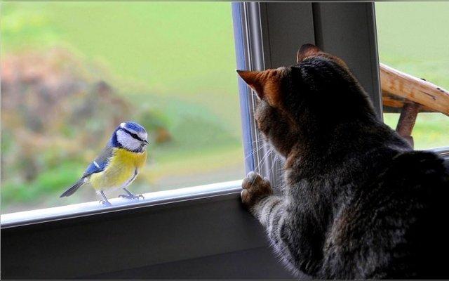 Синица села на окно: примета, к чему