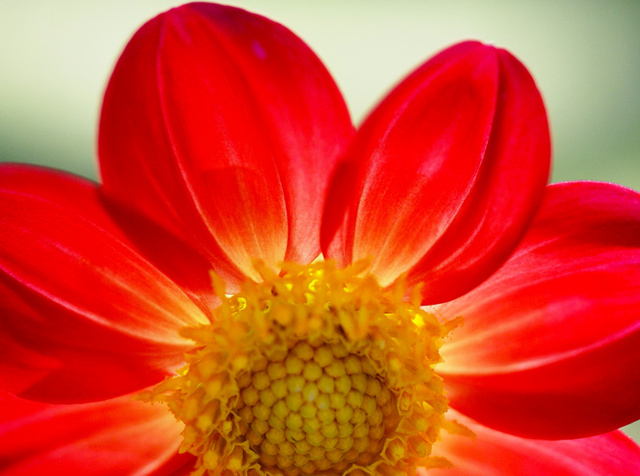 Цветок по знаку Зодиака: какой подходит по дате рождения, растение-талисман по гороскопу