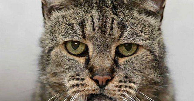 Куда попадает душа кошки после смерти: сколько находится дома и когда уходит, возвращается ли к хозяевам
