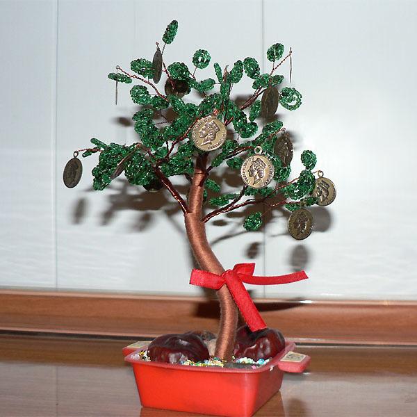 Денежное дерево (толстянка): приметы и суеверия