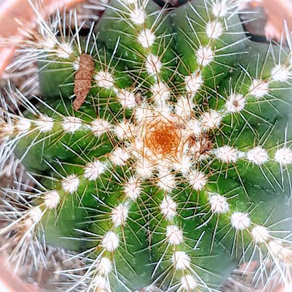 Можно ли держать в доме кактусы: приметы и суеверия