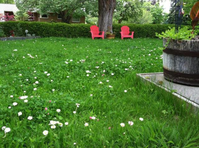Сглаз (порча) на огород: как защитить, снять, определить