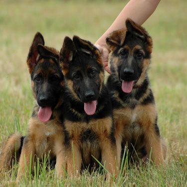 Заговор на продажу щенков: быстро, котят, животных