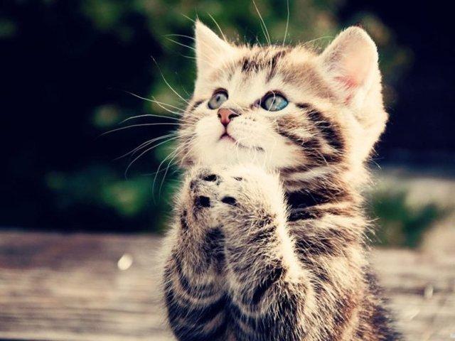 Молитва о пропавшем животном: чтобы кот вернулся домой живой