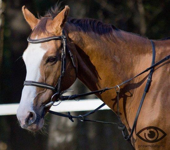 Лошадь и Обезьяна: совместимость в браке и любви по гороскопу