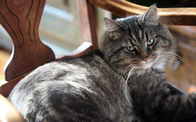 Чужая кошка пришла в дом: примета, к чему, по месяцам
