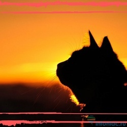 Может ли душа умершего переселиться в кошку, или наоборот?