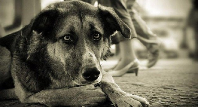 К чему умирает собака в доме: примета, почему, когда