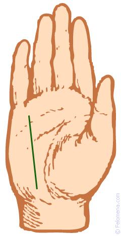 Линия здоровья (Меркурия) на руке: хиромантия, значение, расшифровка