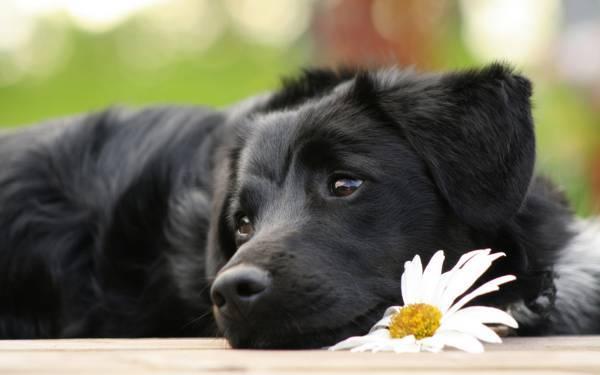 К чему воет собака: во дворе, дома, на улице