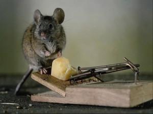 К чему снятся крысы и мыши в одном сне: много, живые, мертвые, в доме, на мне