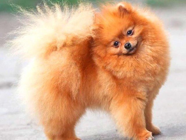 Приметы про собак: год, в доме, рыжая