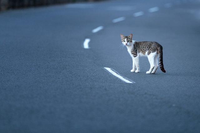 Кот ушел из дома: примета, почему