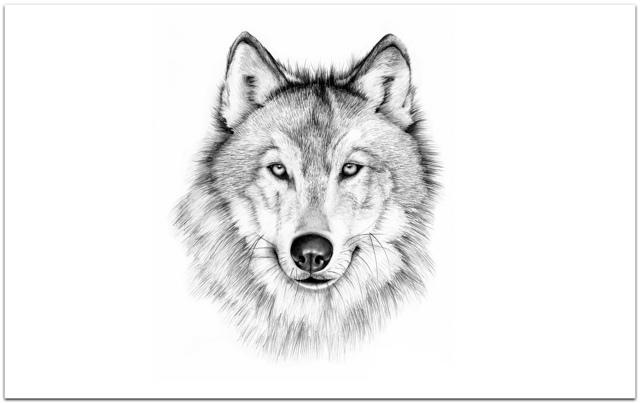 Чертог волка: описание амулета, значение, толкование