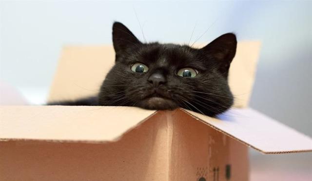 Как забрать с собой домового при переезде в новую квартиру