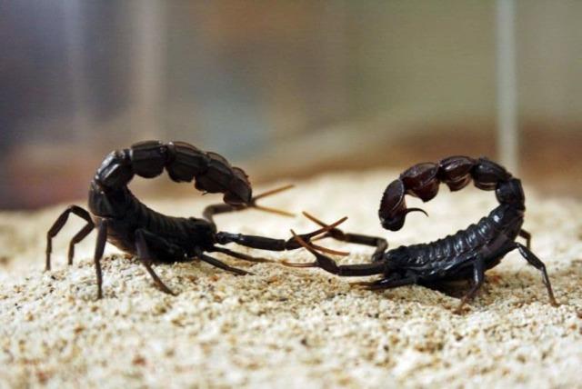 Скорпион и Скорпион: совместимость в любви и браке по гороскопу