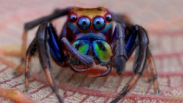 Почему в доме, квартире нельзя убивать пауков: приметы