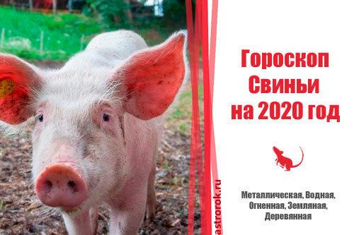 Гороскоп на 2020 год по году рождения для мужчины-Свиньи (Кабана): что ждет в любви и отношениях, деньгах и карьере, прогноз от Глоба и Володиной