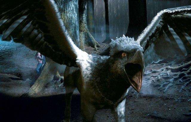 Гиппогриф: кто такой, отличия от грифона и феникса, как выглядит, происхождение и описание в мифологии