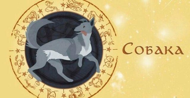 Змея и собака: совместимость в браке, гороскоп