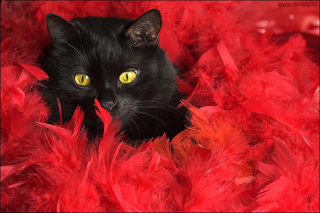 Приметы про кошек и котов: народные суеверия
