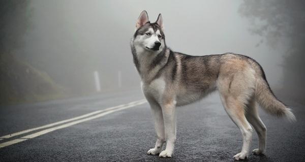 Сбить собаку на машине: примета, что делать