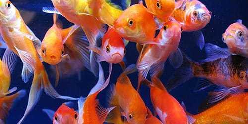 Кормить рыбу во сне или угощать ей другого: кота, медведя, дельфина, ребенка, хлебом, с рук, в аквариуме