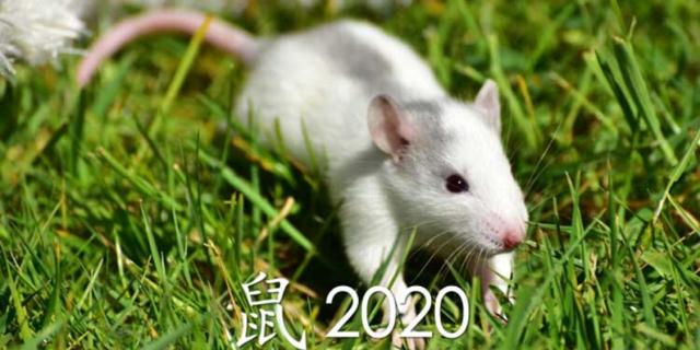 Гороскоп на 2020 год по году рождения для мужчины-Крысы (Мыши): что ждет в любви и отношениях, деньгах и карьере, прогноз от Глоба и Володиной