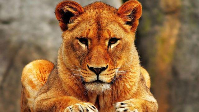 Яна (Янина): значение имени, характер и судьба, происхождение и толкование, совместимость в любви