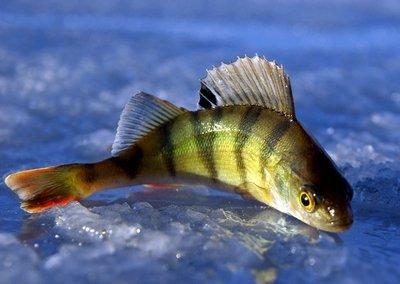 Спасать рыбу во сне: вытаскивать из сети, оживить, больная, раненая, большая, на берегу моря