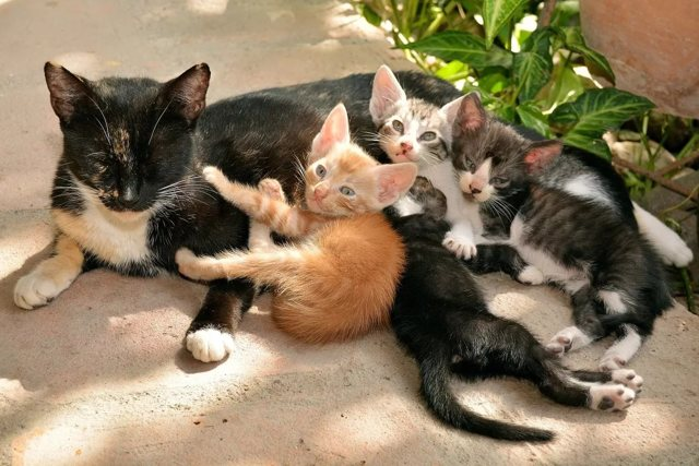 Кошка в доме: приметы и поверья, суеверия, вернулась