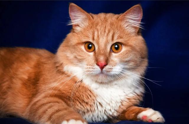 Рыжий кот в доме: приметы, суеверия