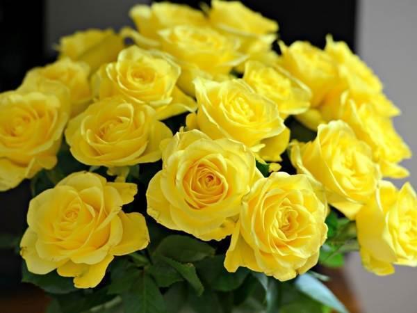 К чему дарят желтые розы девушке