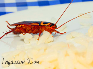 Заговор от тараканов: в любое время дня и ночи, как избавиться раз и навсегда, в доме