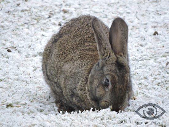 Кролик (Кот) и Бык: совместимость в браке