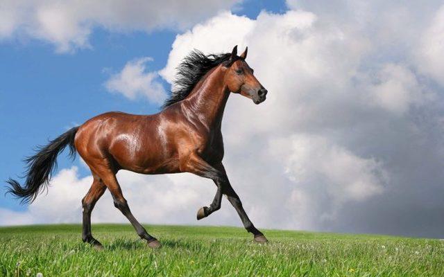 Лошадь и Крыса: совместимость в любви, по гороскопу