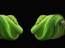 Гороскоп на 2020 год по году рождения для мужчины-Змеи: что ждет в любви и отношениях, деньгах и карьере, прогноз от Глоба и Володиной
