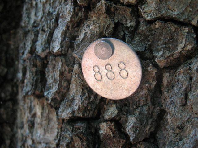 Значение числа 888 в Ангельской нумерологии