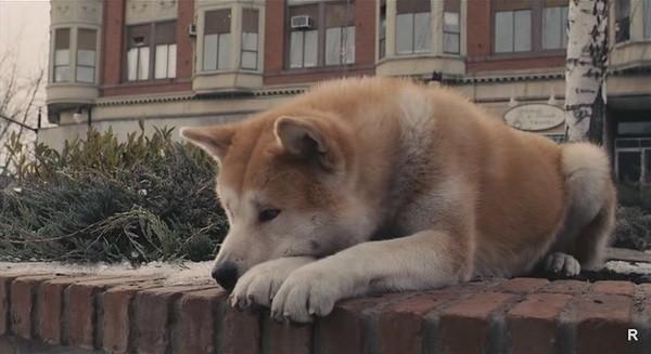 Душа у животных после смерти: куда уходит и сколько находится дома