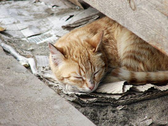 К чему чихает кошка (кот): примета, когда