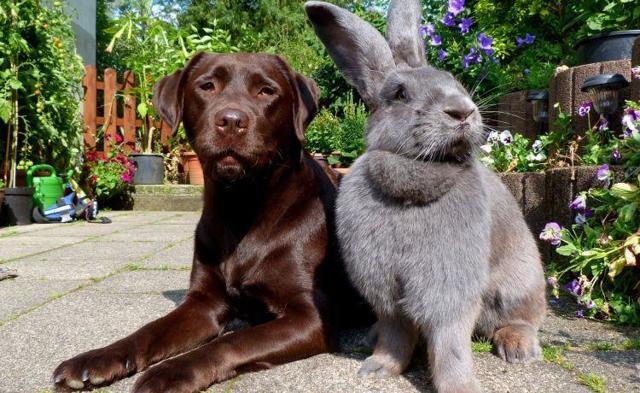 Собака и Кролик (Кот): совместимость по гороскопу