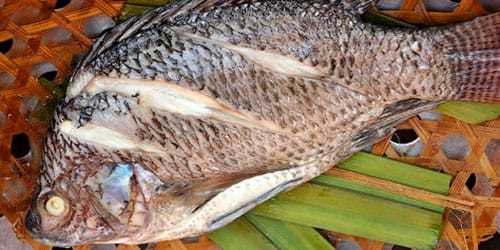 Вареная рыба во сне: видеть, варить суп (уху), кушать, отдать