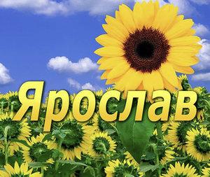 Ярослав (Яр, Ярик, Слава): значение имени для мальчика, характер и судьба, происхождение и толкование, совместимость в любви